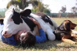 Yoga y Vegetarianismo
